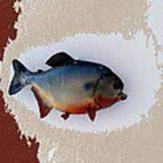 Fish Mount Set 12 C Art Print
