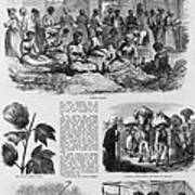 Five 1869 Illustrations Of Sea Island Art Print