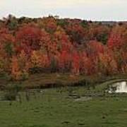 Flaming Foliage Autumn Pasture Art Print