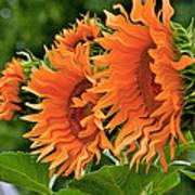 Flaming Sunflowers Art Print