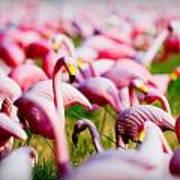 Flamingo 7 Art Print