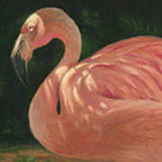 Flamingo In Dappled Light Art Print