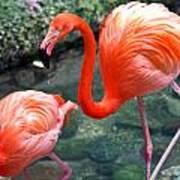 Flamingo River Walk Art Print