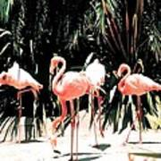 Flamingo Struts Art Print