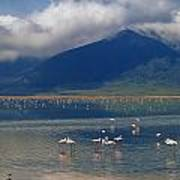 Flamingoes In Crater Lake At Ngorongoro Art Print