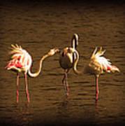 Flamingos Argue Art Print