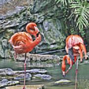 Flamingos Img 2897 Art Print