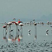Flamingos In Magadi Art Print