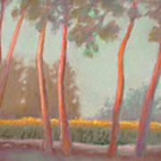 Flanders Cornfield Art Print
