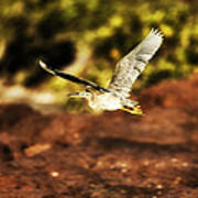Flight Of The Heron  Art Print