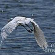Flight Over The Lake 3 Art Print
