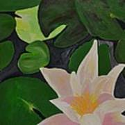 Floating Lotus 2 Art Print by Holly Donohoe