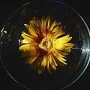 Floatting Flower Art Print