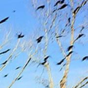 Flocking Crows Art Print