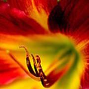 Floral Macro Of A Blossom Art Print