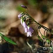 Floral Mantis Art Print