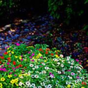 Floral Path Art Print
