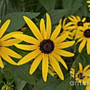 Floral Sunshine Art Print