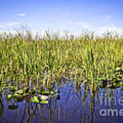 Florida Everglades 5 Art Print