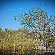 Florida Everglades 8 Art Print
