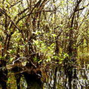 Florida Everglades 9 Art Print