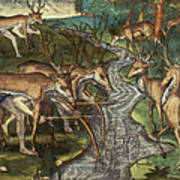 Florida: Hunters, C1591 Art Print