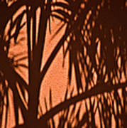 Florida Palm Shadow Art Print