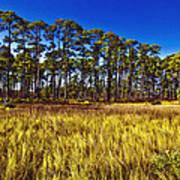 Florida Pine 3 Art Print
