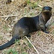 Florida River Otter Art Print by Lynda Dawson-Youngclaus