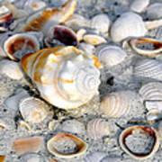 Florida Shells Art Print