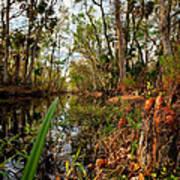 Florida Stream Art Print