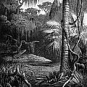 Florida: Swamp Art Print