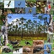 Florida Wildlife Photo Collage Art Print