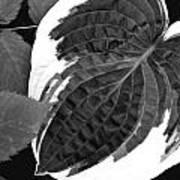Flower 27 Art Print