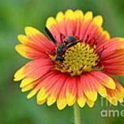 Flower And Insect  Art Print