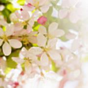 Flower Blossoms Art Print