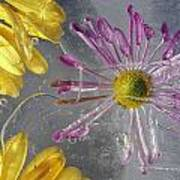 Flower Blossoms Under Ice Art Print