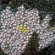 Flower Bottle Cap Mosaic Print by Paul Van Scott