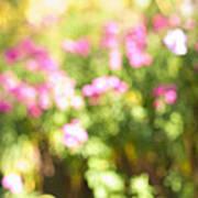 Flower Garden In Sunshine Art Print