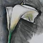 Flower In Bloom - Los Angeles Art Print