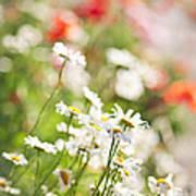 Flower Meadow Art Print by Elena Elisseeva
