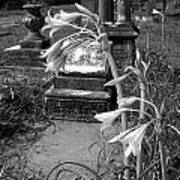 Flower Old Grave Art Print