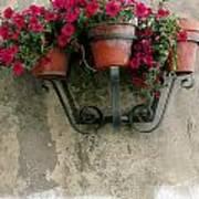 Flower Pots On Old Wall Art Print
