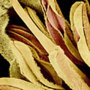 Flower Reproductive Parts, Sem Art Print