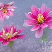 Flower Triplets Art Print