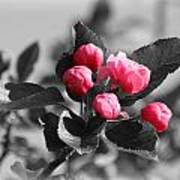 Flowering Crabtree In Select Color Art Print by Mark J Seefeldt