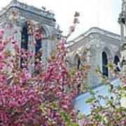 Flowering Notre Dame Art Print