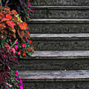 Flowers And Steps Art Print
