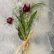 Flowers Frozen In Ice Art Print