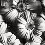 Flowers In Sepia Tone Art Print